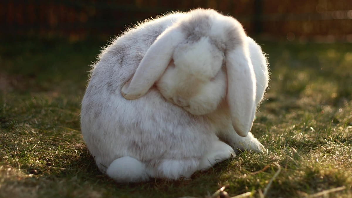 how to care for a pet rabbit - an in depth guide to rabbit care