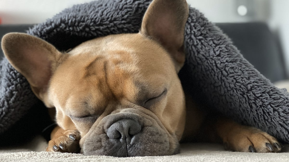 how to get a new dog acclimated to life in your home