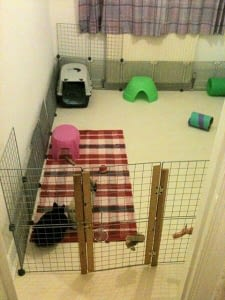 Proofing your house for your rabbit as a pet is necessary.