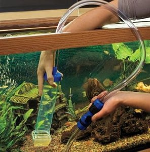Clean your pet turtles tank once every 3 weeks.