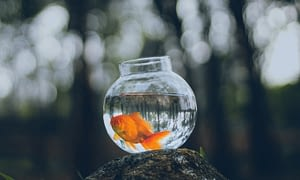 Gold fishes are a great starter pet for kids and are very low maintenance pets.