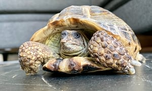 Turtles are the perfect low maintenance pets.