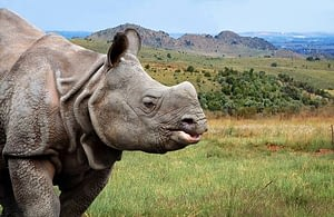 Javan rhinos are critically endangered species that would extinct if not protected