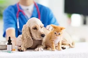 Take your pets to vet as soon as possible during this quarantine