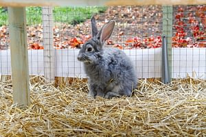 Your rabbit as a pet would poop a lot.