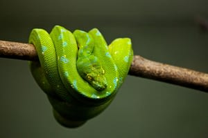 Snakes tops the list of the easiest and low maintenance pets