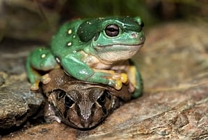 Frogs are relatively inexpensive and very low maintenance pets