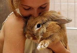 Your raabit as a pet needs a dedicated and a loving pet parent.