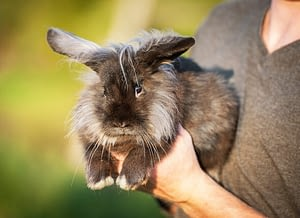 Taking good care of your pet rabbit might get expensive