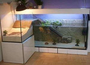 Turtle as a pet needs a large and a spacious tank to live happily and comfortably