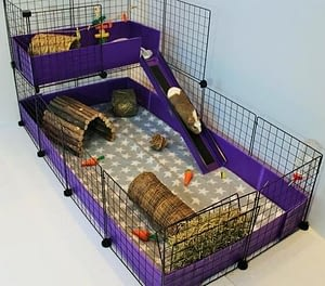 Guinea Pig as a pet needs large and spacious homes