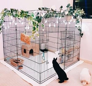 Rabbits need a large and spacious cage to live comfortably
