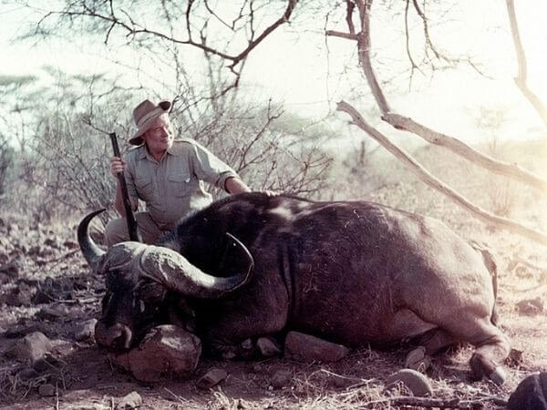 Ernest Hemingway poses with a Cape buffalo he shot in 1953