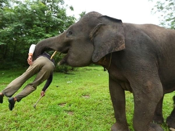 Elephant attacks on tour operator in Bali, Thailand
