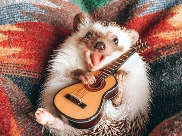 a hedgehog playing guitar