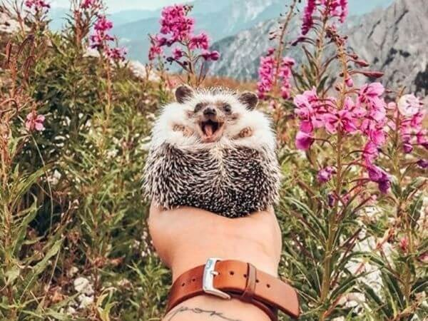 hedgehog smiling between flowers