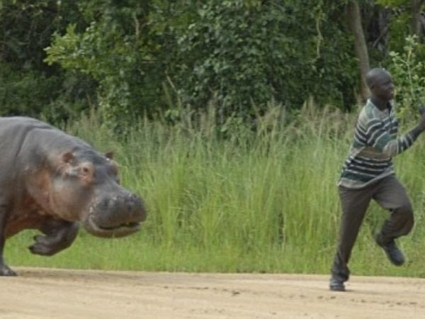 Man killed after hippo selfie attempt in Zimbabwe