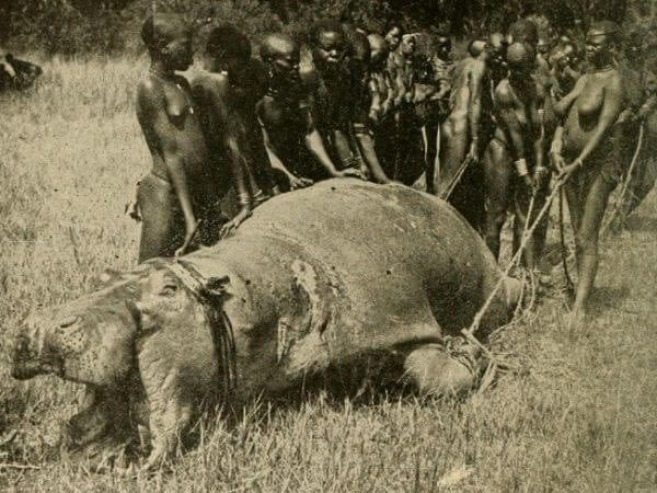 Ugandan tribe with Hippo slain for food in the early 20th century