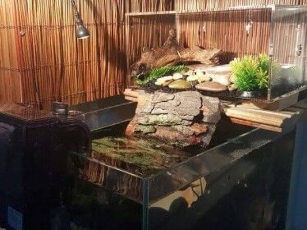a very innovative basking area for your turtle