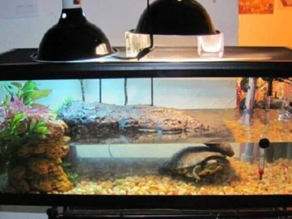turtle cage setup with heater