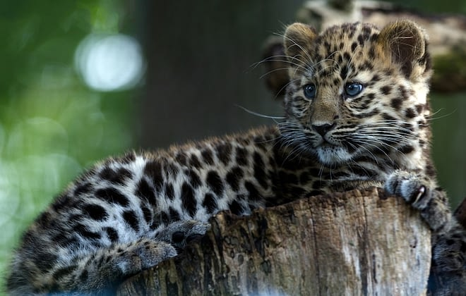 List of 10 most critically endangered animals